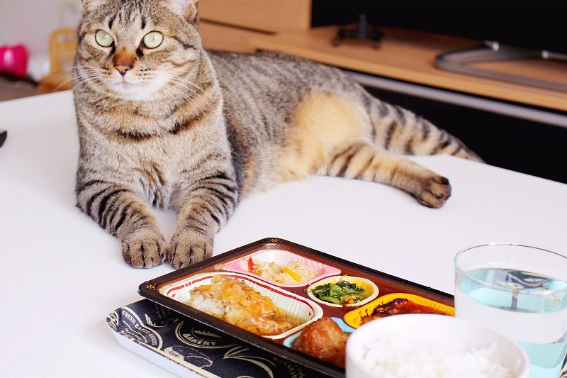 食宅便 鱈(たら)の中華あんかけ7